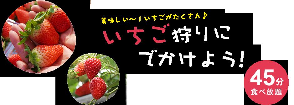 滋賀県のいちご狩りイチゴ摘みはまさみ農園
